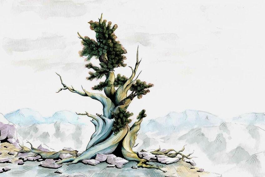 Baum zeichnen – Charaktervolle Bäume skizzieren leicht gemacht