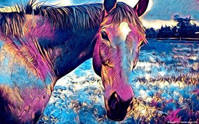 Die besten Ausmalbilder Pferde – kostenlose Malvorlagen