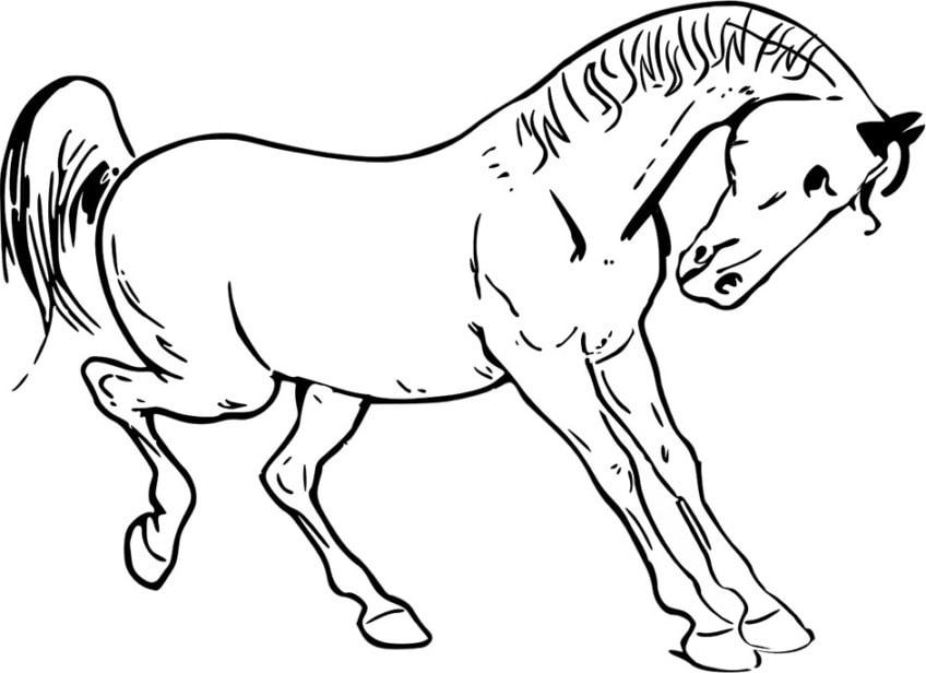 die besten ausmalbilder pferde - kostenlose malvorlagen