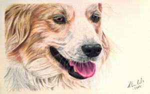 hund zeichnen