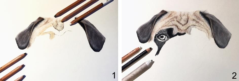 hund zeichnen tutorial