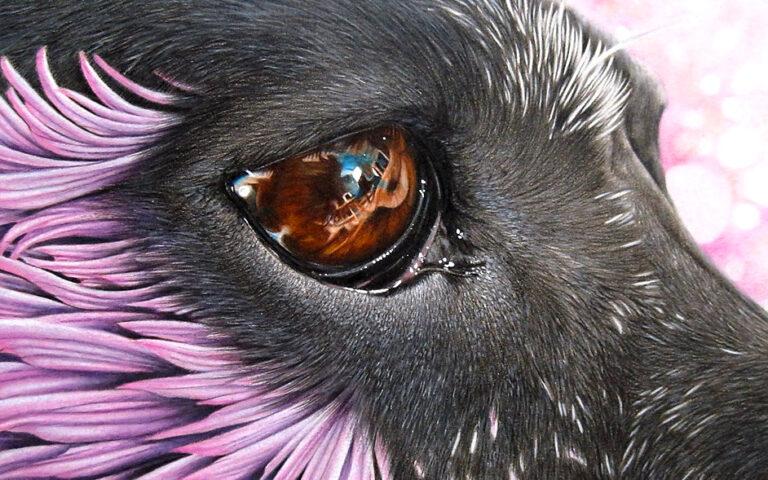 Tiere zeichnen – Anleitung um verschiedene Tiere zu malen