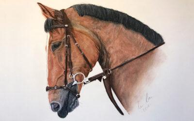 Pferd zeichnen – Anleitung zum Pferde malen (Portrait)