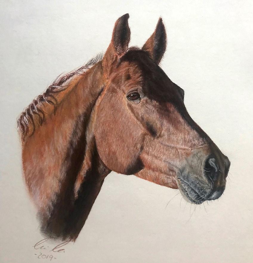 pferd zeichnung