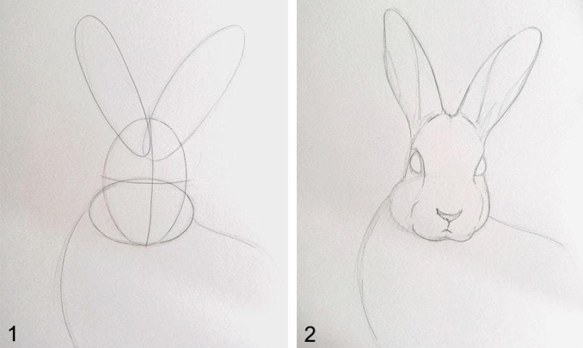 hasen zeichnen