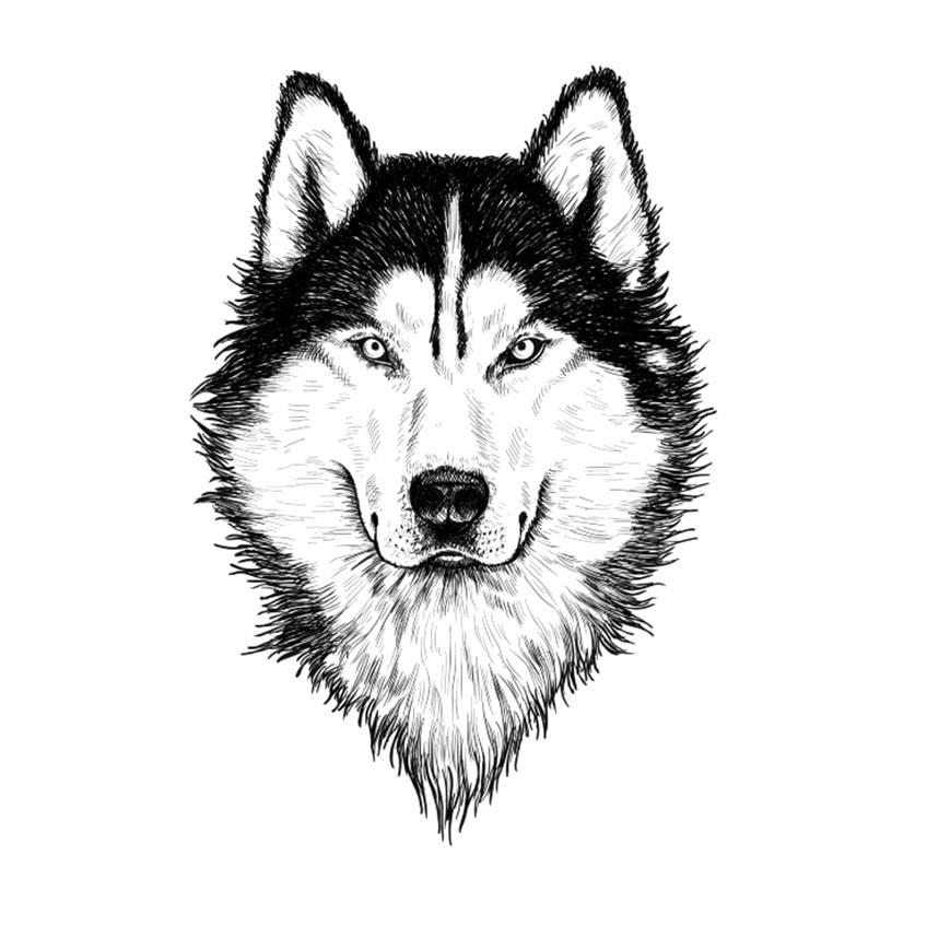 wölfe zeichnen