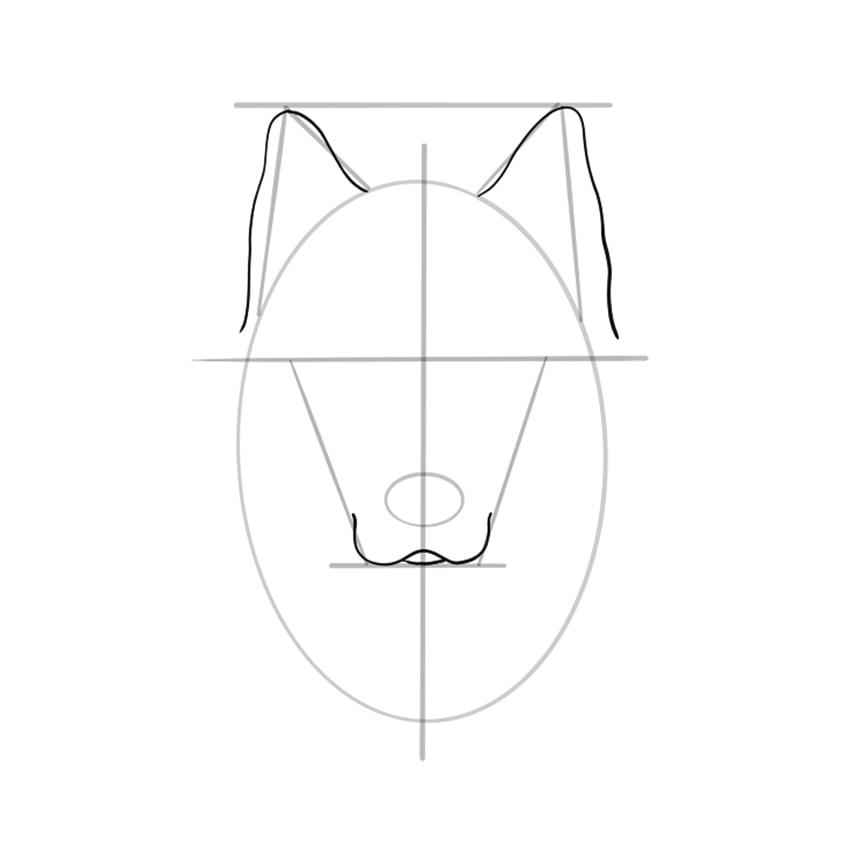 wolf zeichnen schritt 06