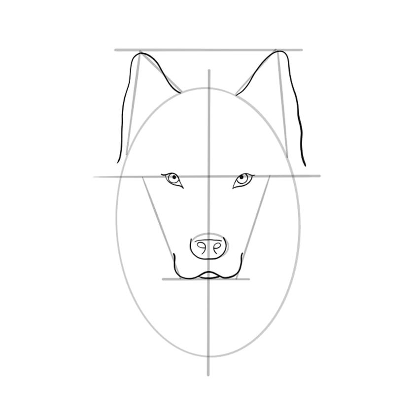 wolf zeichnen schritt 07