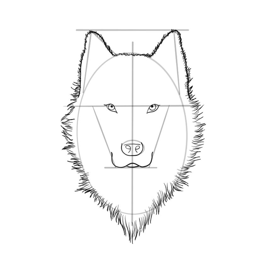 wolf zeichnen schritt 08 A