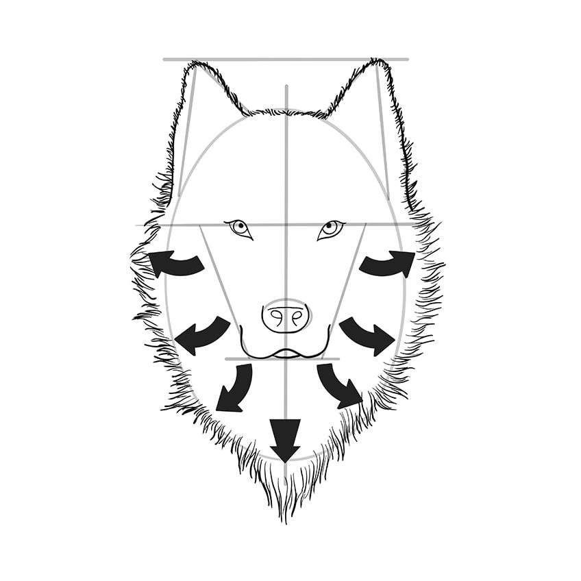 wolf zeichnen schritt 08 B