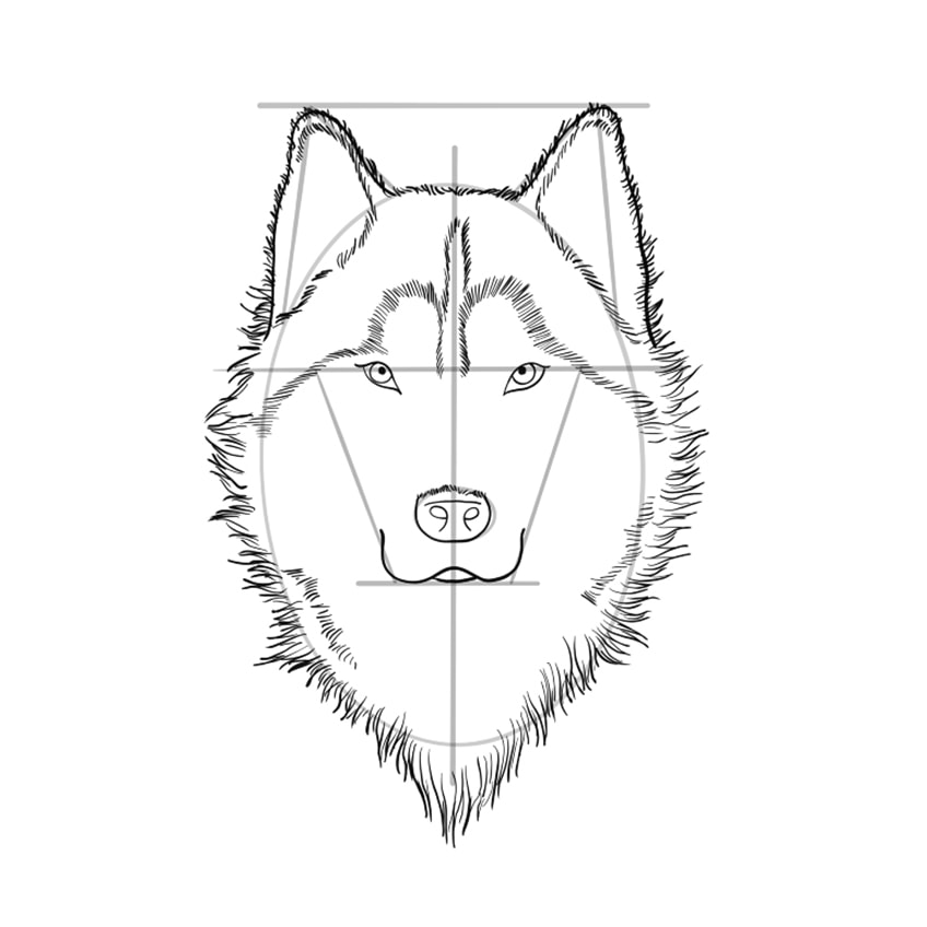 wolf zeichnen schritt 09