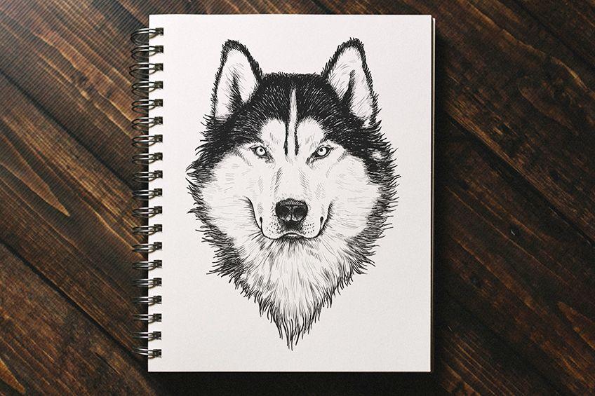 wolf zeichnen