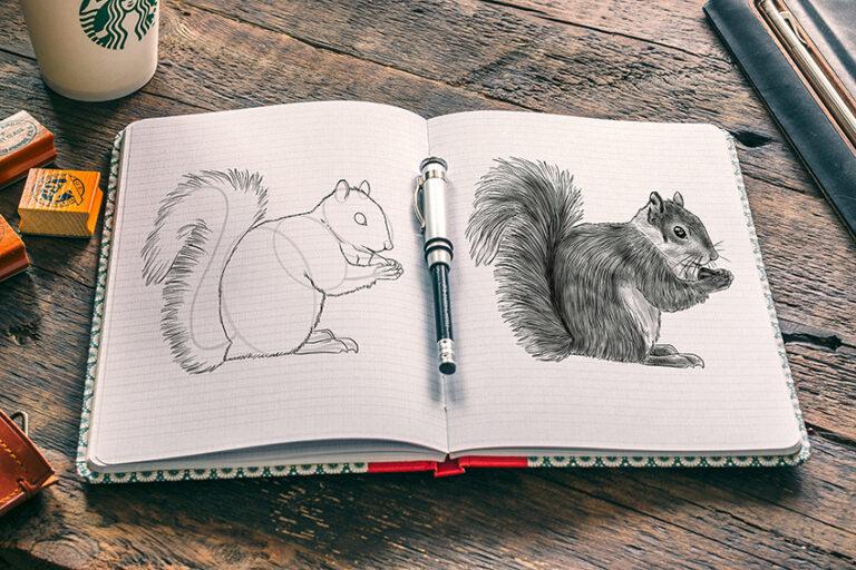 Eichhörnchen malen – Ganz einfach dein erstes Eichhörnchen zeichnen