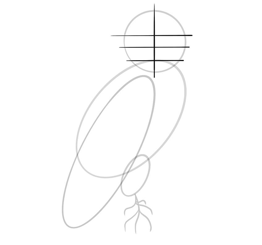 eule zeichnen schritt 06