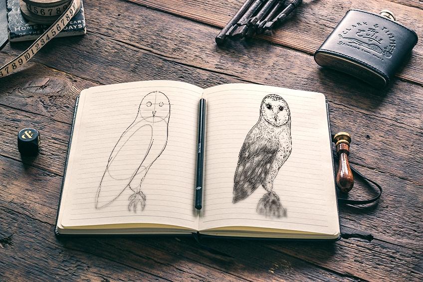 eule zeichnen