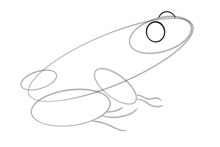 frosch malen schritt 06