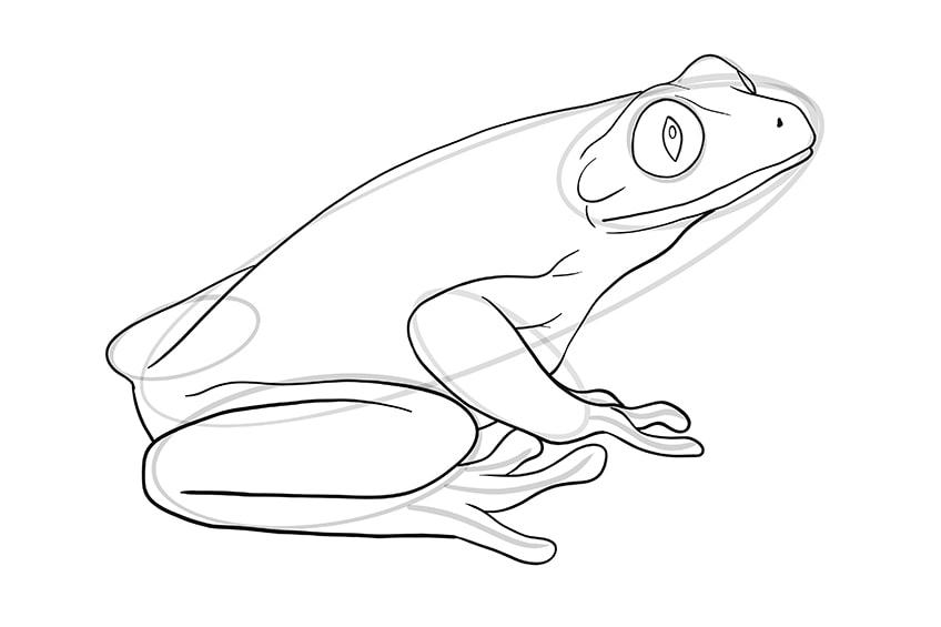 frosch malen schritt 08