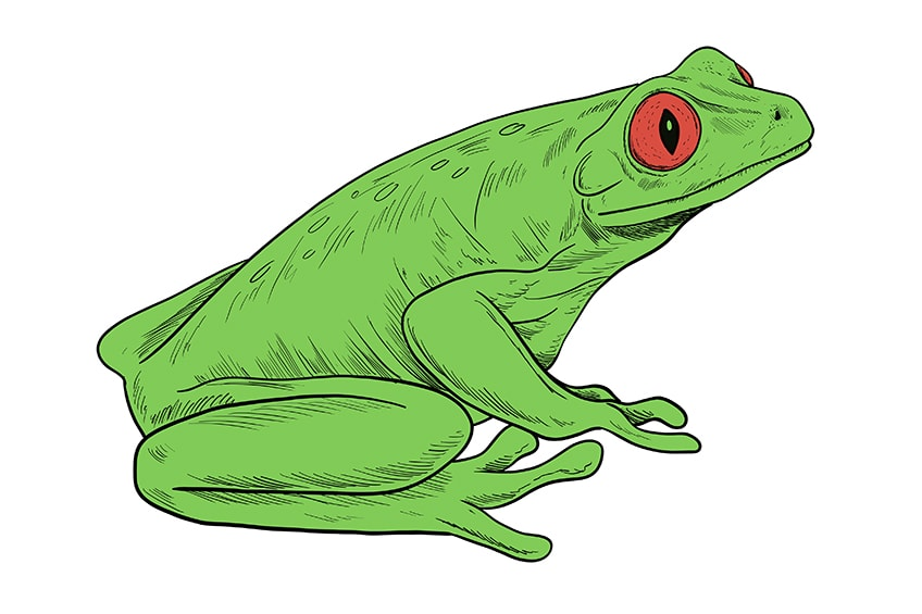 frosch malen schritt 10