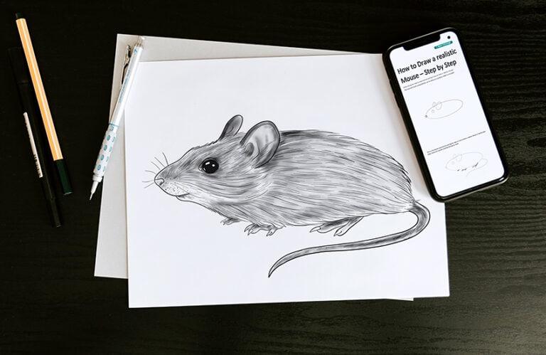 Maus zeichnen – Einfache Anleitung um eine realistische Maus zu malen