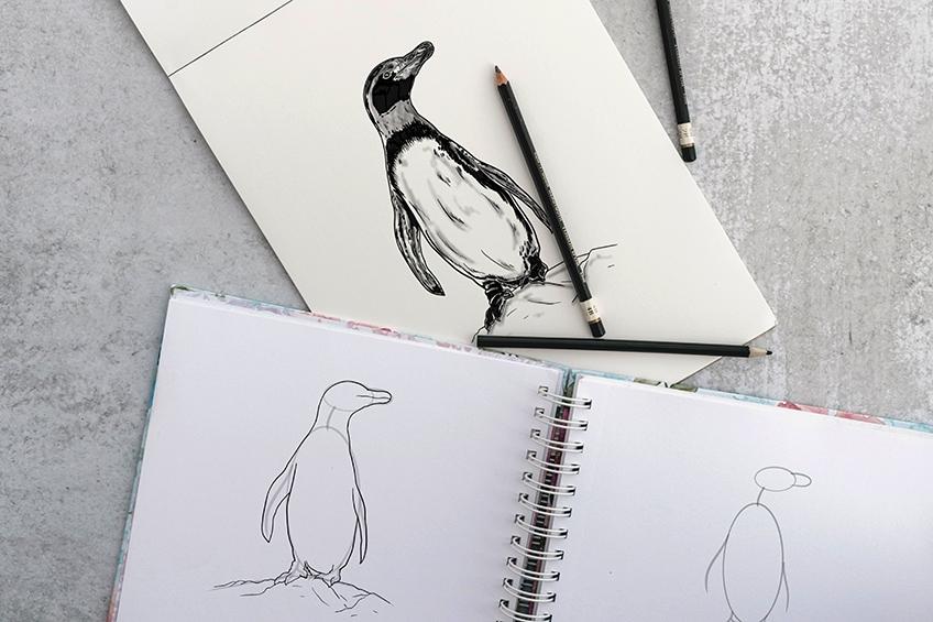 pinguin zeichnen