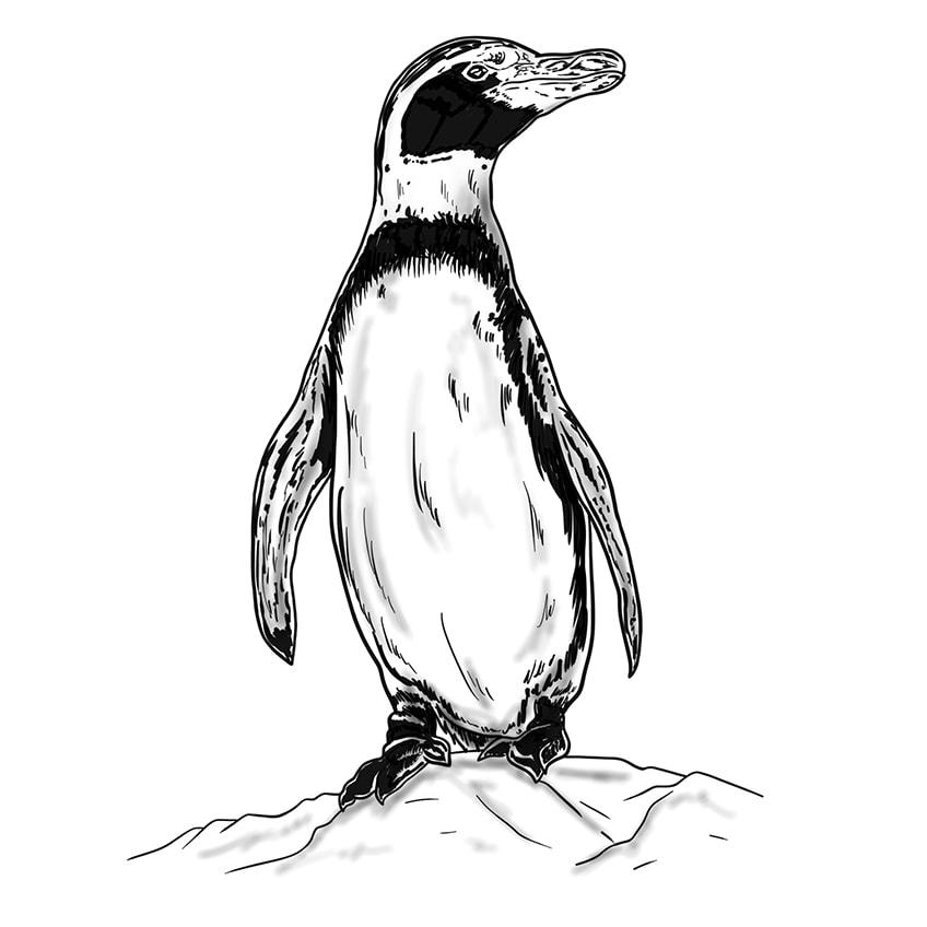 pinguin zeichnung
