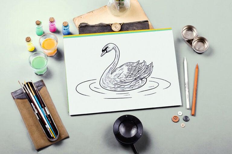 Schwan zeichnen – Erstelle eine realistische Schwan Zeichnung