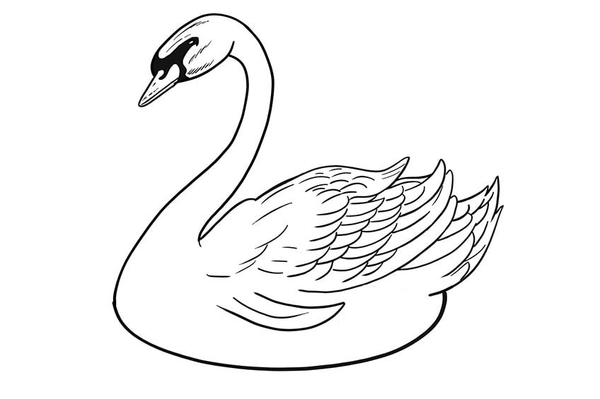 schwan zeichnen schritt 10