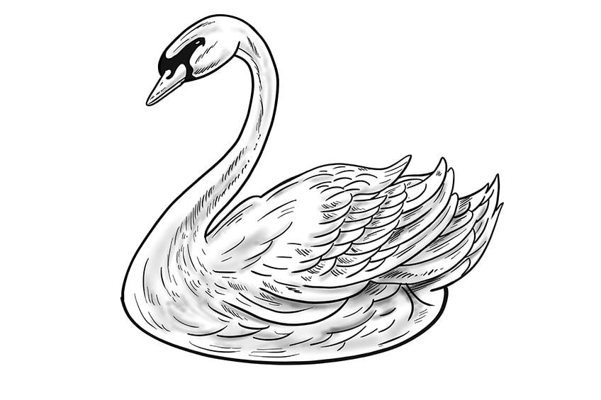 schwan zeichnen schritt 12