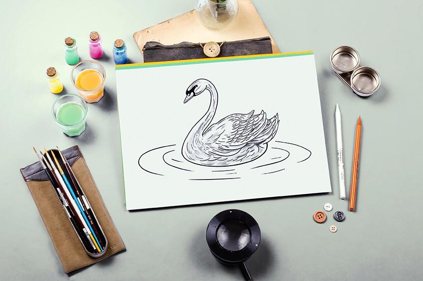 schwan zeichnen
