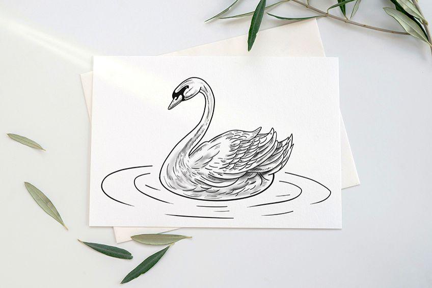 schwan zeichnung bleistift