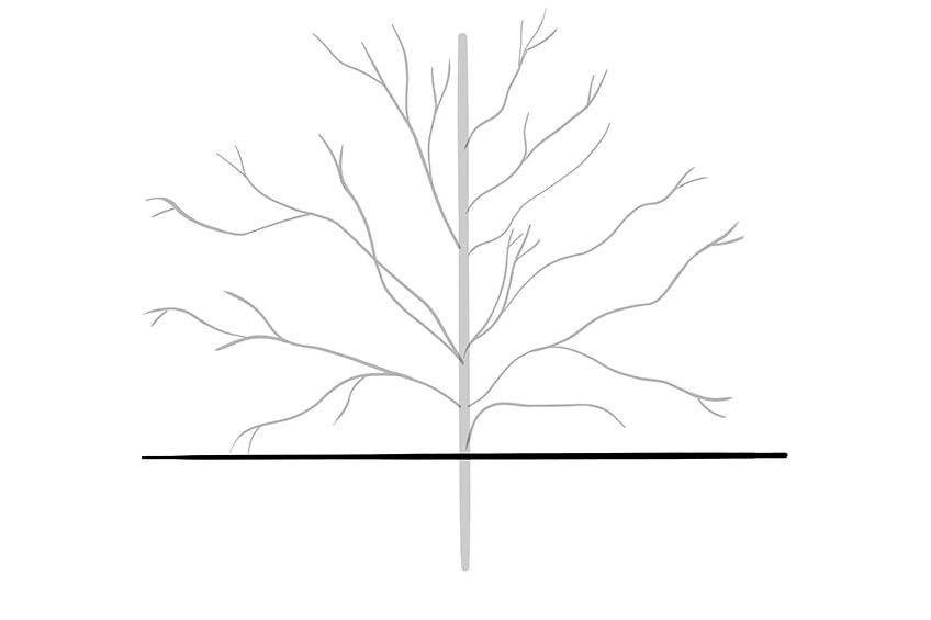 baum zeichnen schritt 03