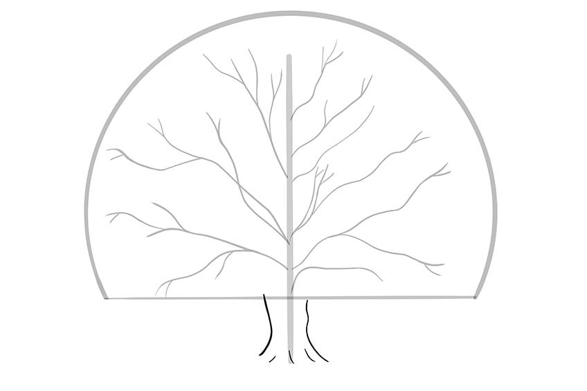 baum zeichnen schritt 04