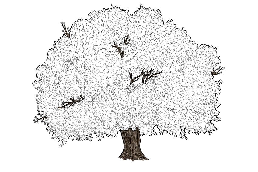 baum zeichnen schritt 11