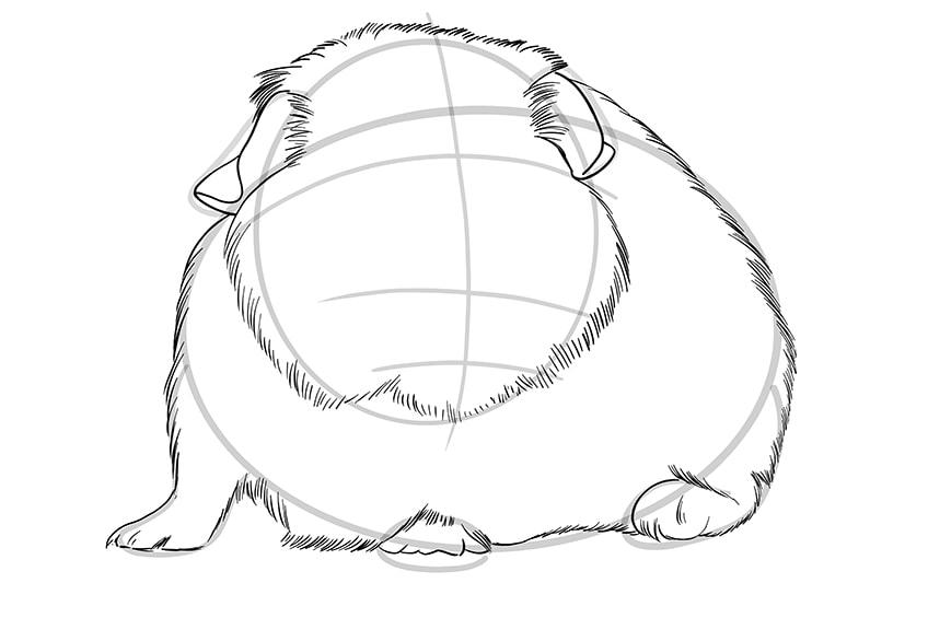 Meerschweinchen zeichnen Schritt 07