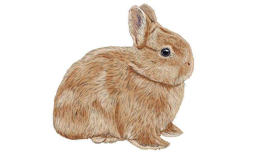 Osterhase Zeichnung