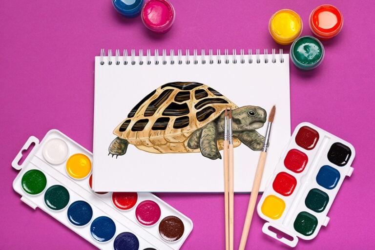 Schildkröte zeichnen – Lerne das Malen einer realistischen Schildkroete