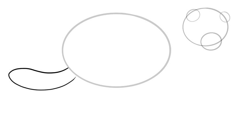 frettchen zeichnen schritt 05