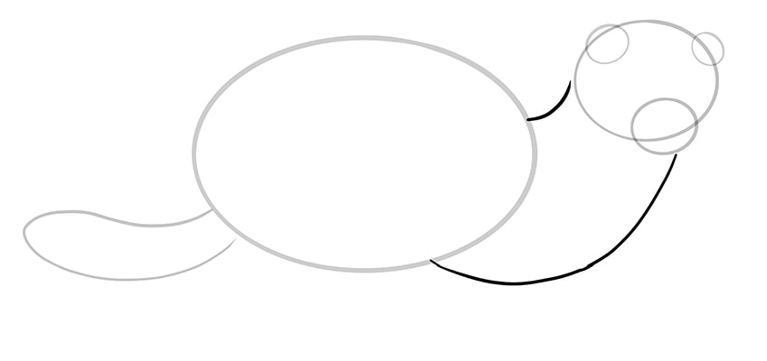 frettchen zeichnen schritt 06