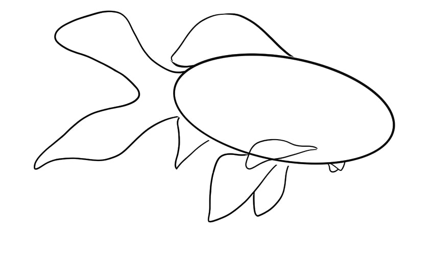 goldfisch zeichnen 07