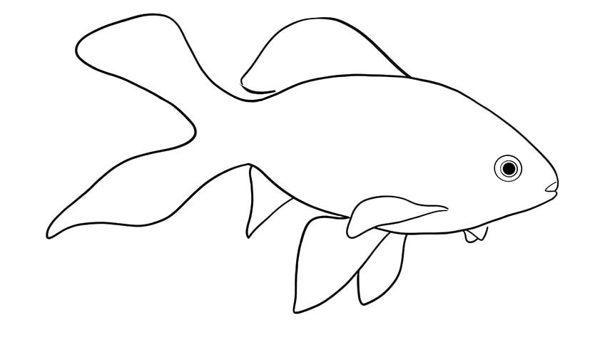 goldfisch zeichnen 09