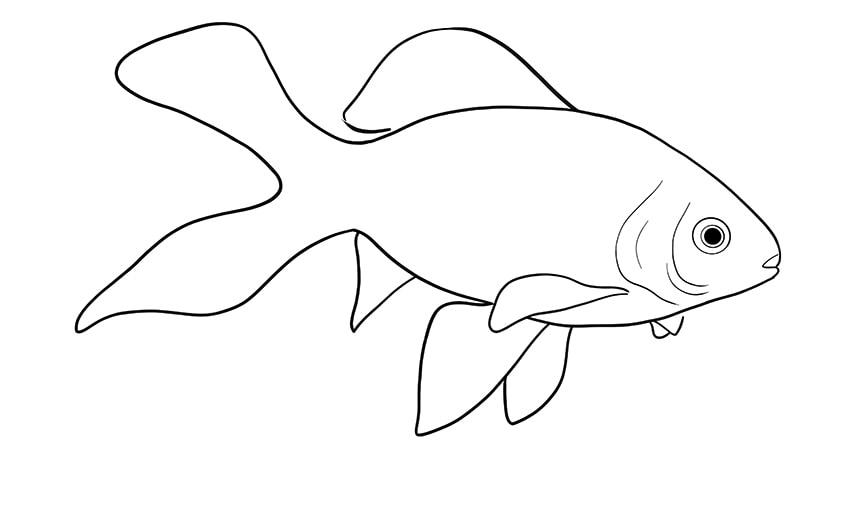 goldfisch zeichnen 10