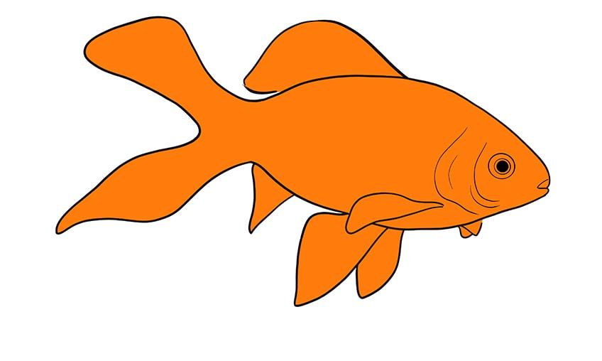 goldfisch zeichnen 11