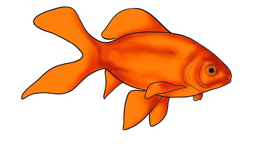 goldfisch zeichnen 12