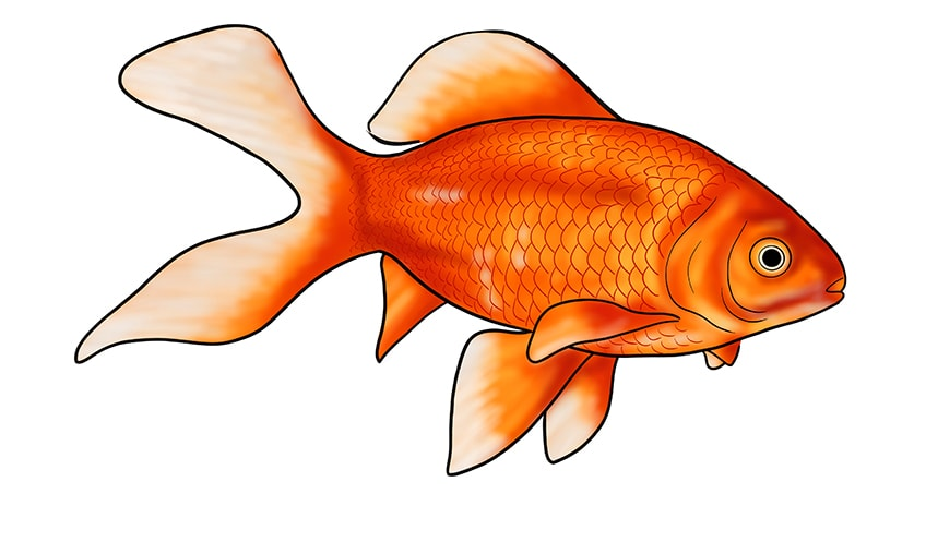goldfisch zeichnen 15