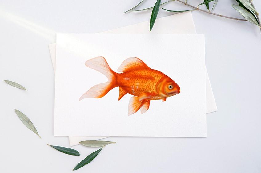 goldfisch zeichnen