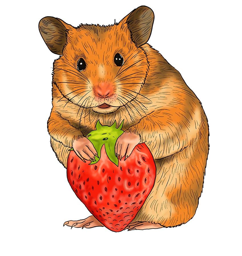hamster skizze