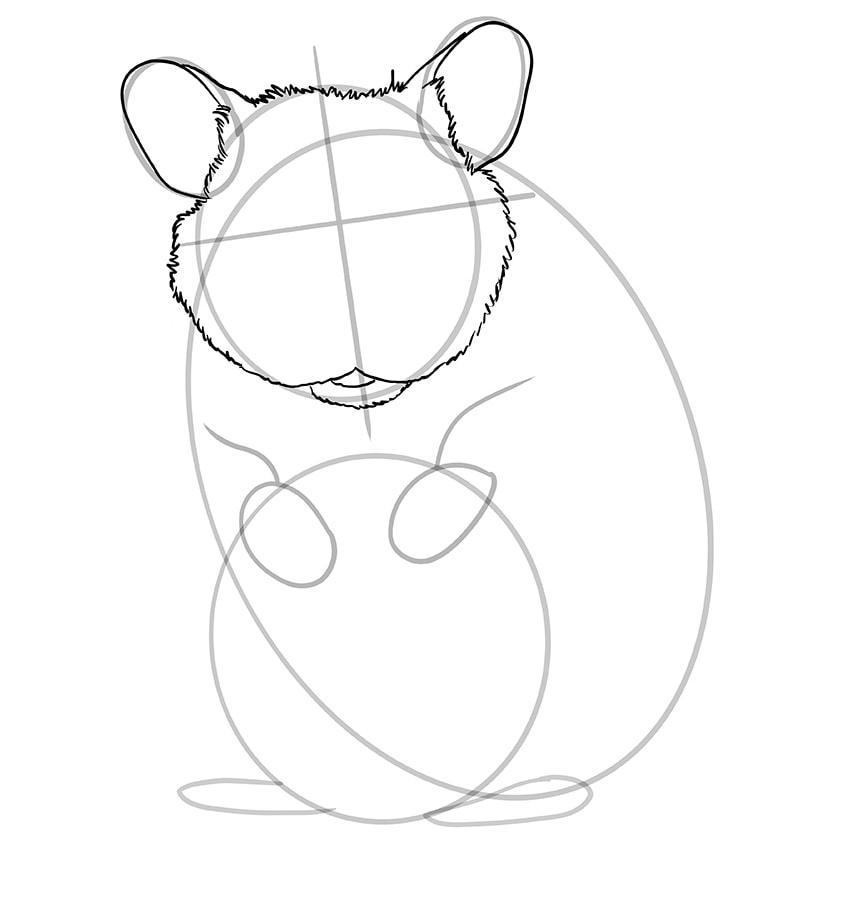 hamster zeichnen schritt 08