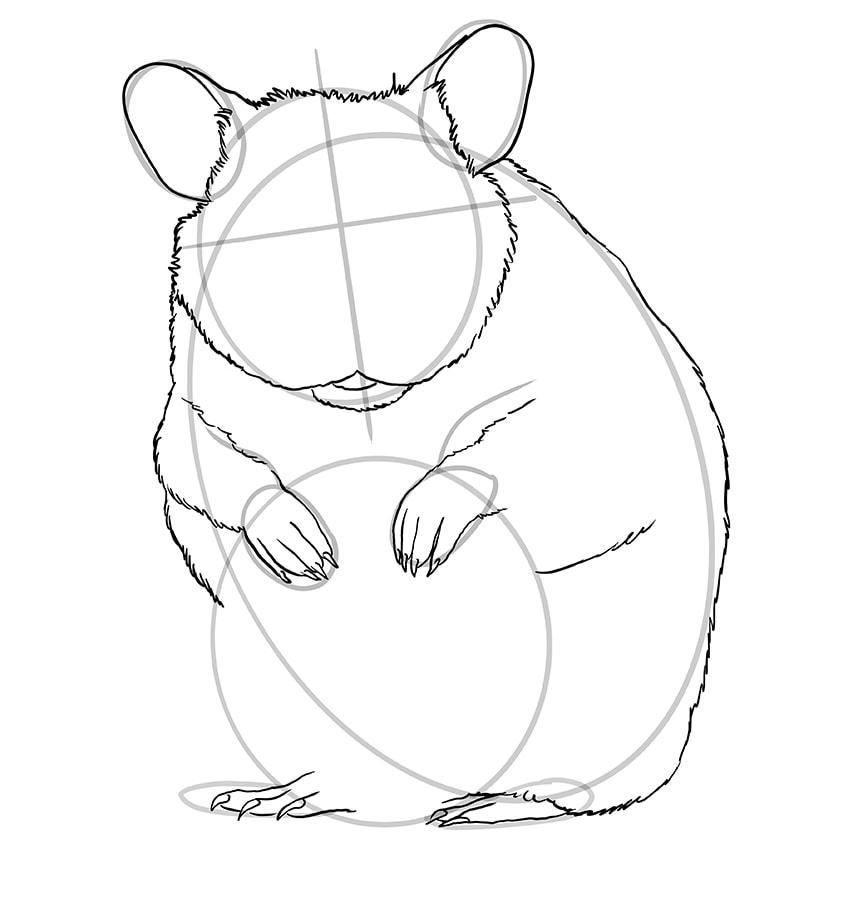 hamster zeichnen schritt 09
