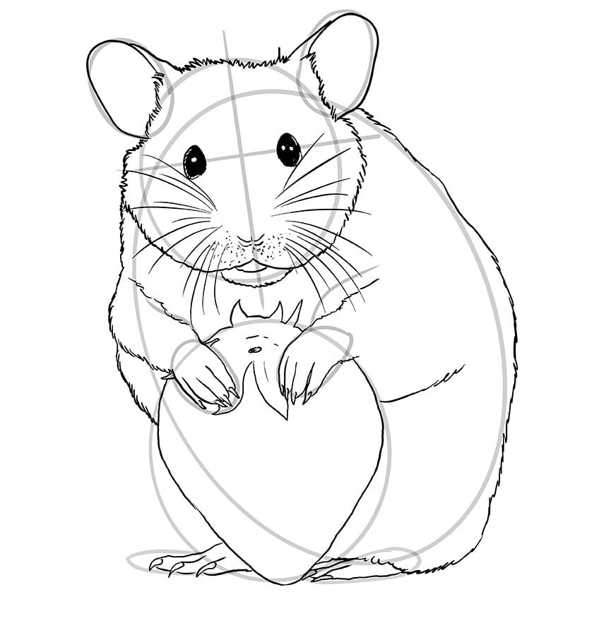 hamster zeichnen schritt 11