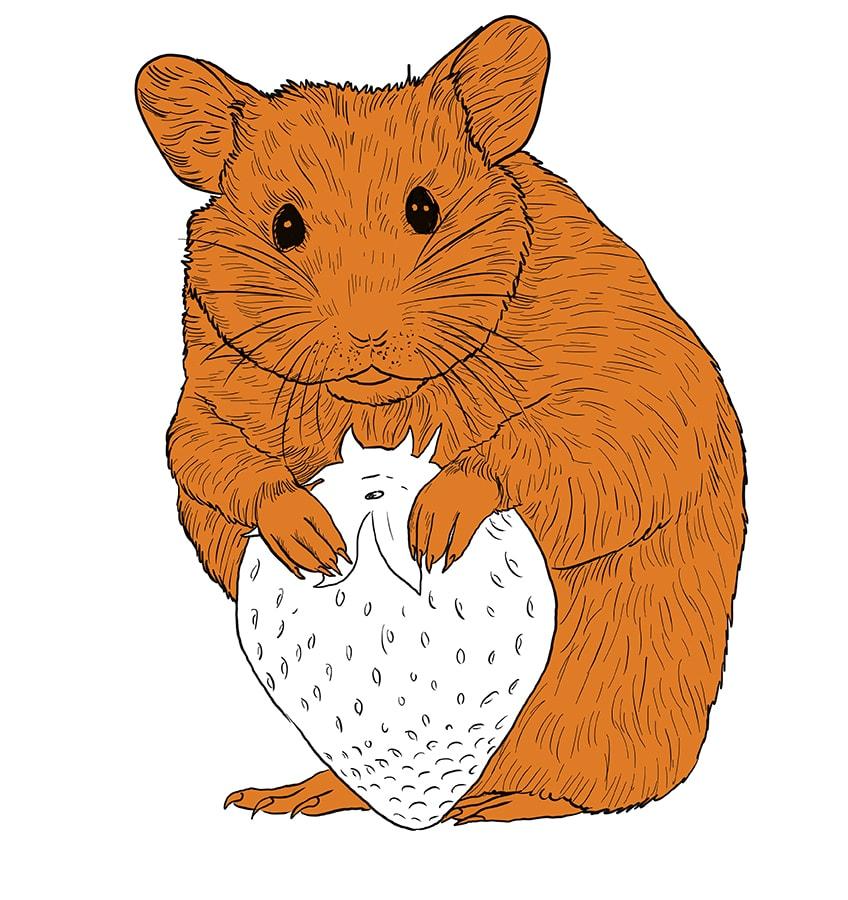 hamster zeichnen schritt 13